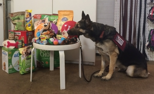 birthday party for service dogs